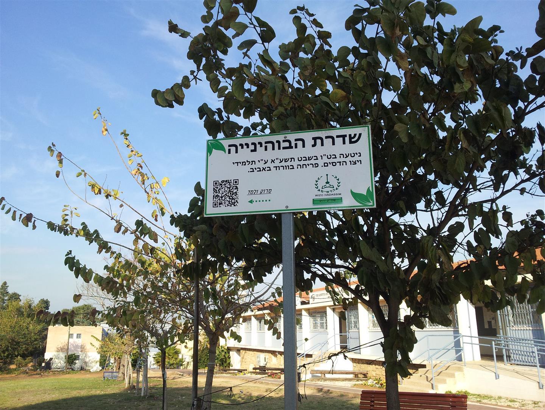 שדרת עצי הבוהיניה לפני הפעילות שבצענו ביום המעשים הטובים