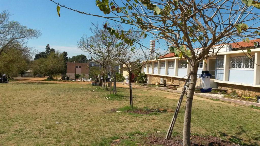 שדרת עצי הבוהיניה  מתהדרת במתקני האכלה לציפורים שיצרנו ביום המעשים הטובים
