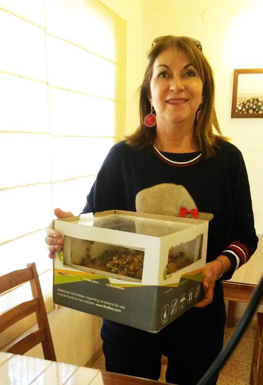 עם קופסת דבורי הבומבוס היוצרות האבקה טבעית בקיבוץ שדה אליהו
