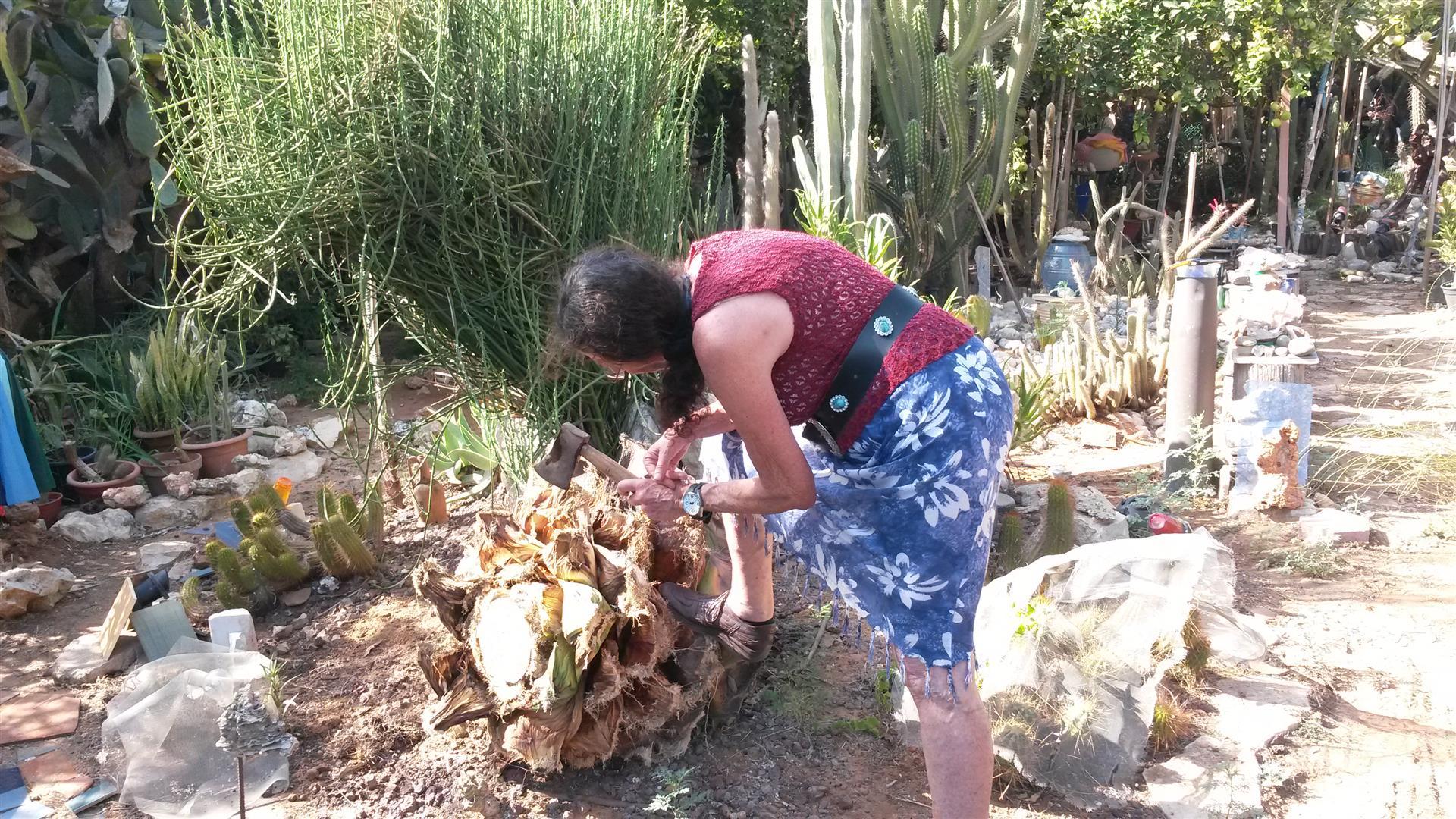 האמנית יעל פרויליך בגן האקולוגי שלה מדגימה לי עבודה עם הגרזן הנוסטלגי של אבא