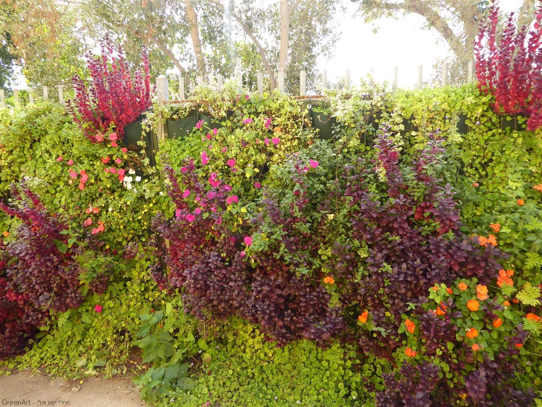 גדר ירוקה בחצר מרכז הקיימות קיפוד שבכפר סבא