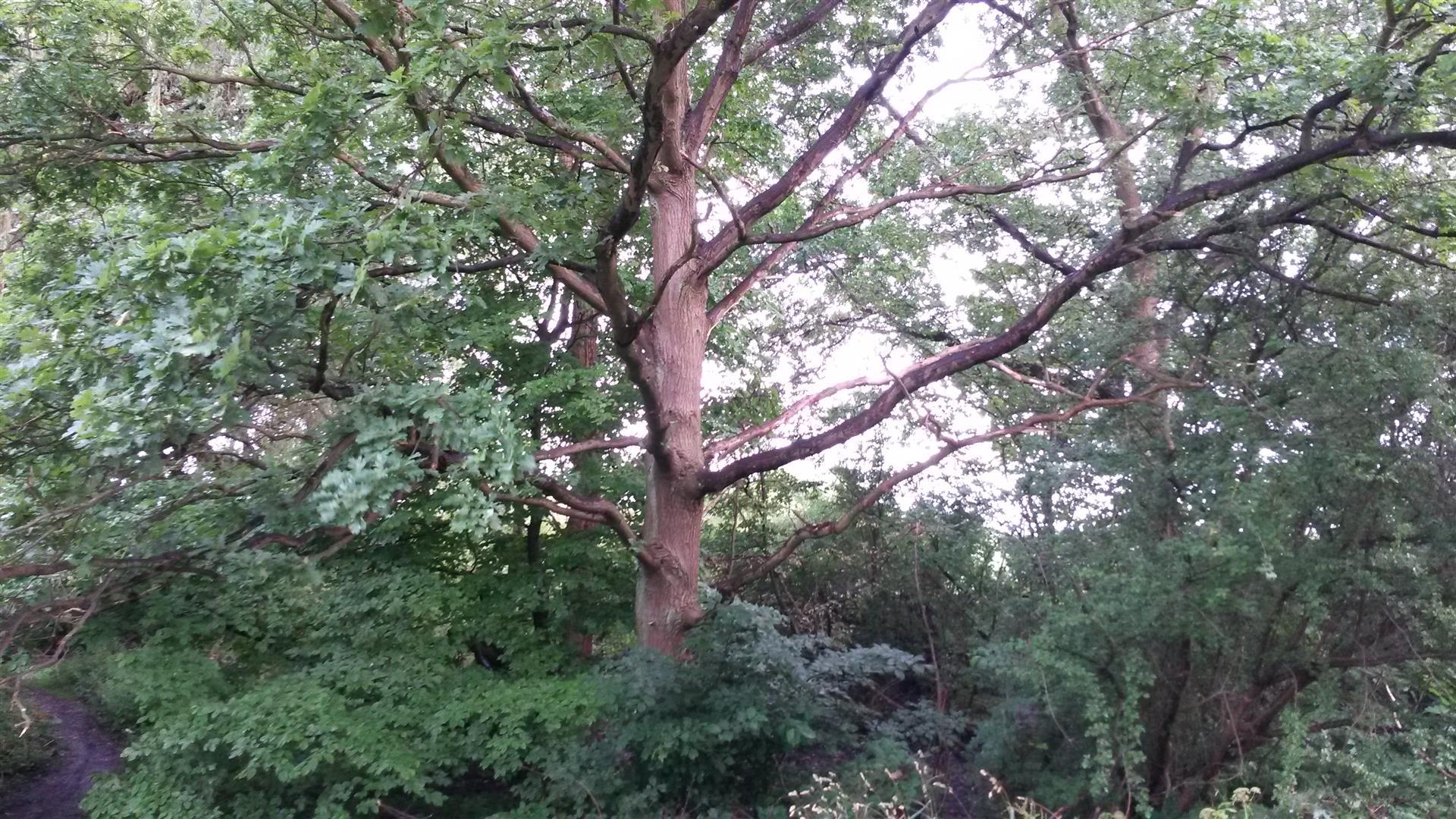 עצים עתיקים באגם אוטראסלב מוסה  הירוק