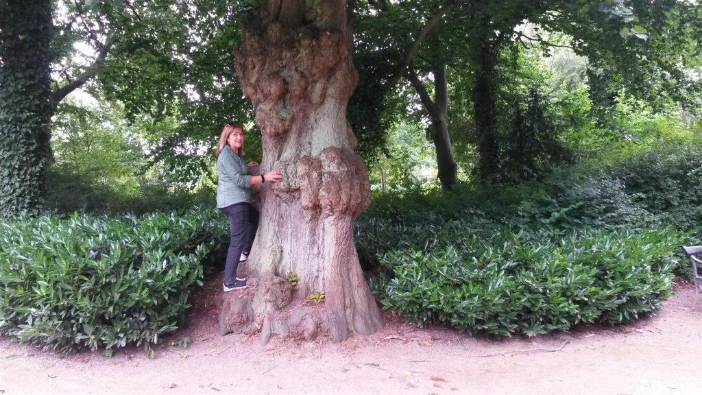 חיבוק לעצים המרהיבים  בגני פרדריקסברג