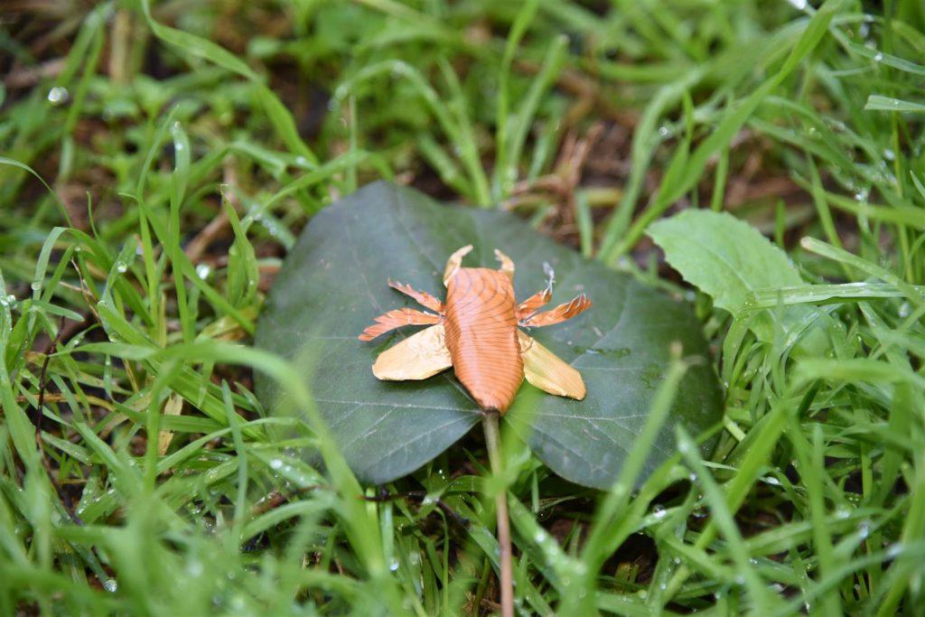 פיסול חרקים מקפסולות של קפה כהזדהות עם הצורך בשמירת מגוון הביולוגי של בעלי החיים בטבע