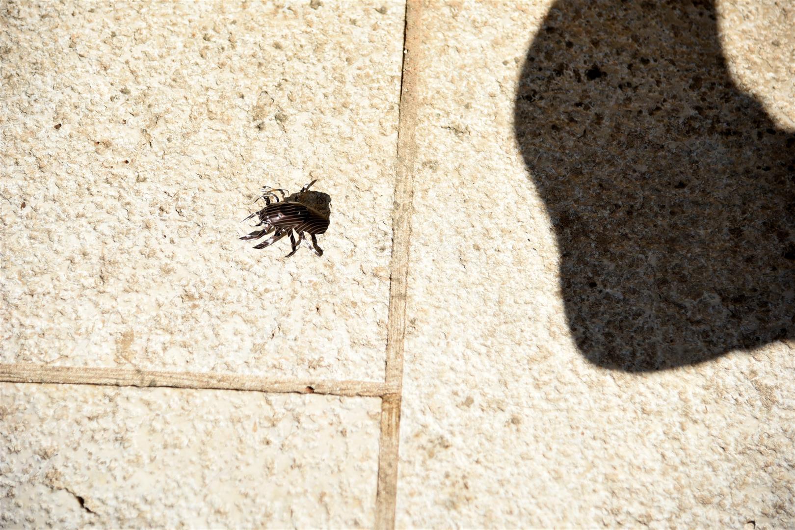 אל תמהרו לדרוך על החרקים - חישבו כאילו אתם במקומם...
