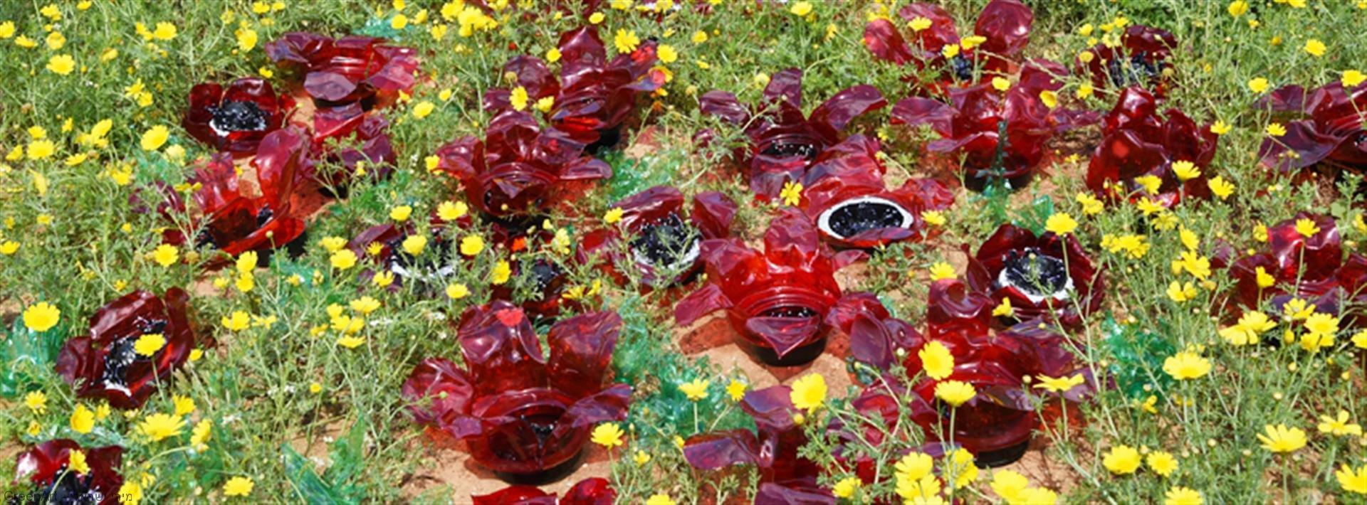 שדה כלניות ופרגים לשימור השטחים הפתוחים לפרחי הבר בנוף מולדת
