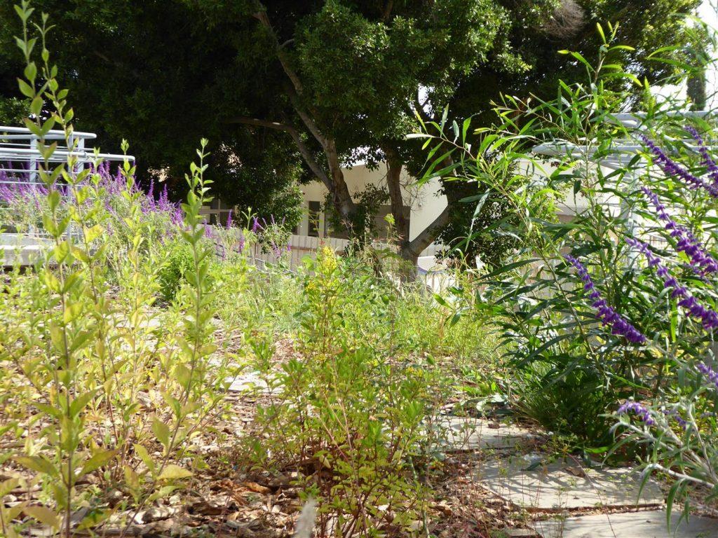 הגן האקולוגי שבמרכז  Art קיימא בכפר סבא