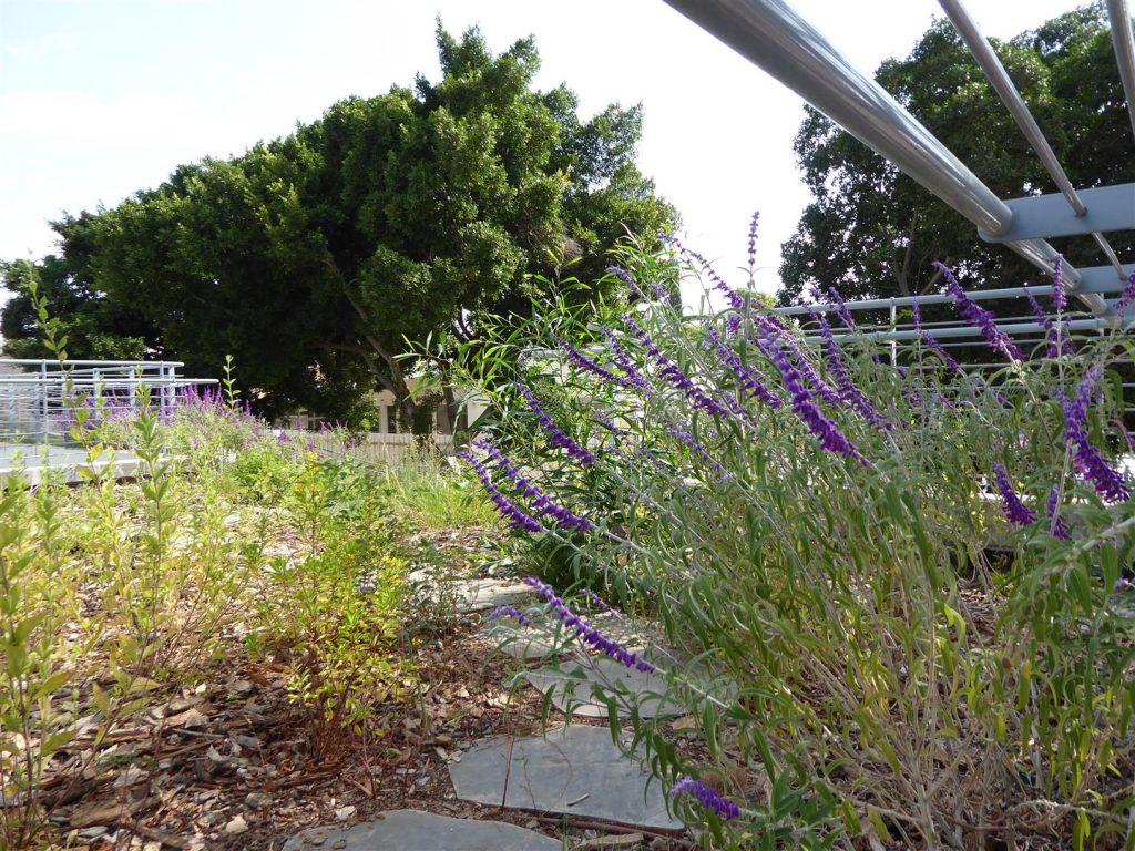 הגן האקולוגי בחצר מרכז Art קיימא שבכפר סבא