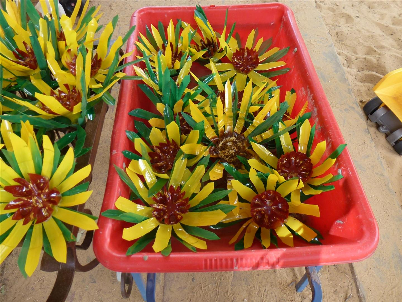 חמניות  מבקבוקי פלסטיק במריצות של גן חמניה