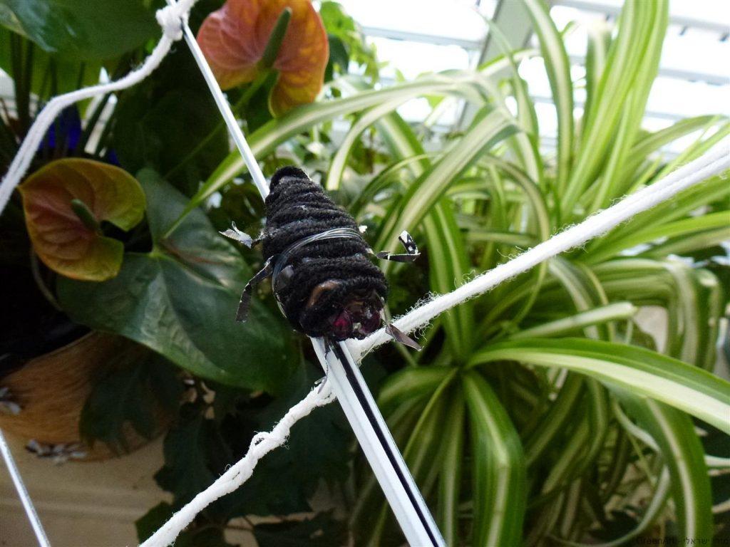 חרקים מפוסלים מקפסולות של קפה וסיכות ראש