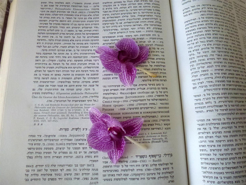 פרחי הסחלב שנשרו הולכים לייבוש בין הספרים