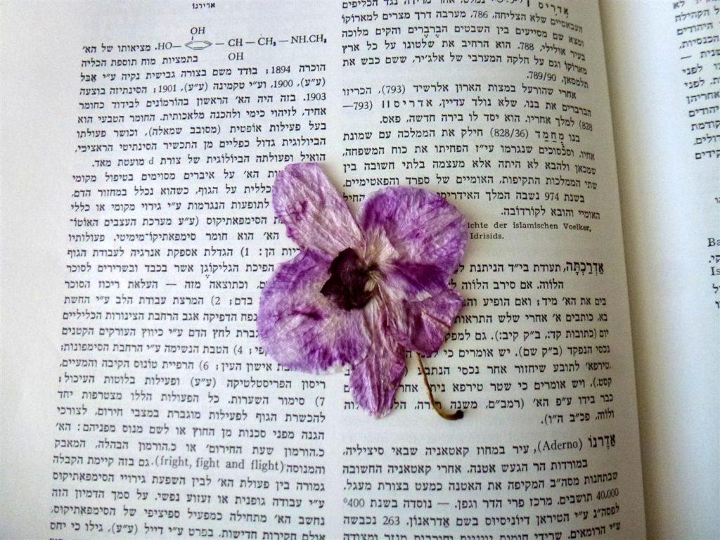 פרח הסחלב בתהליך הייבוש בין הספרים