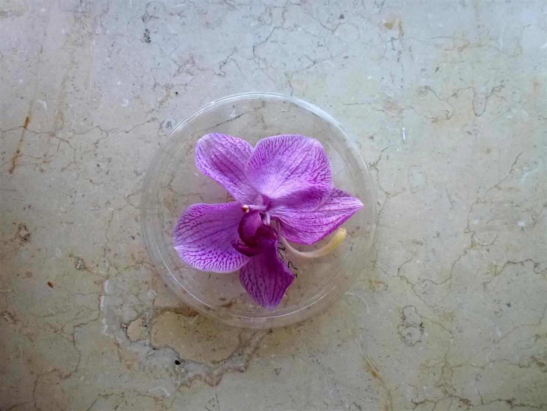 נבילת פרחי הסחלב שהלכו ליבוש בין הספרים יולי 2014