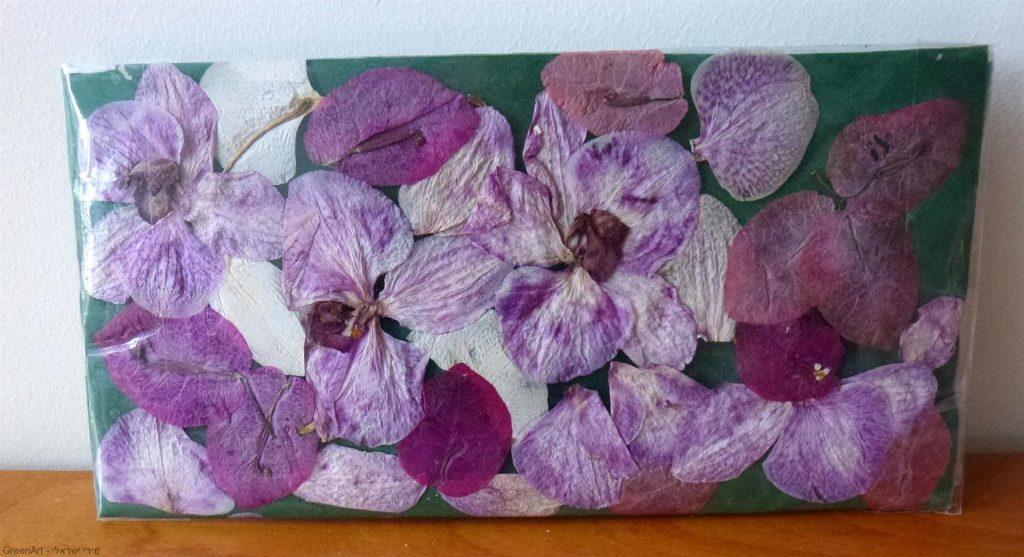 חיים חדשים בפרחי הסחלב  שלי הנבולים