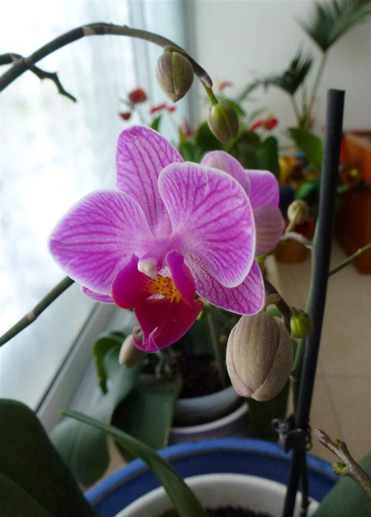 פרח ראשון שפרח בסבב חדש לשנת 2015- לכבוד ערב חג פסח