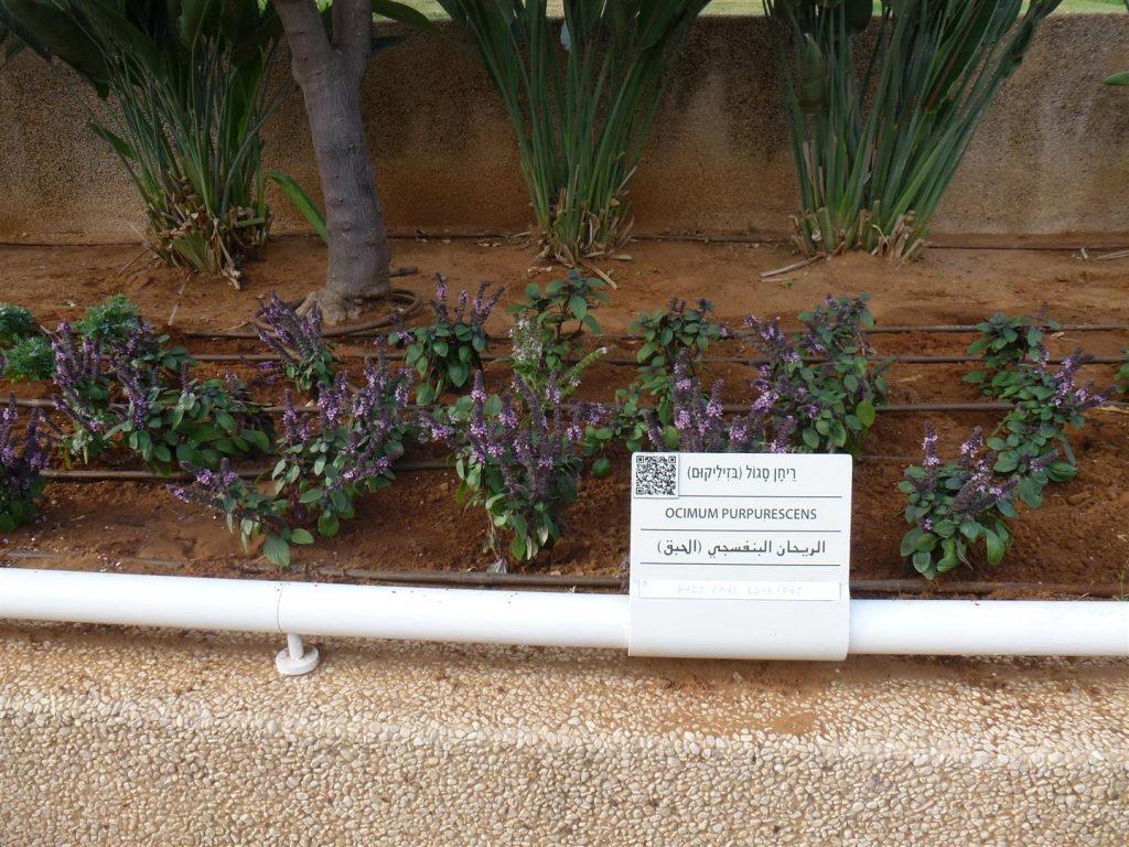 גן קסום עם צמחי תבלין רבים ומגוונים עם שילוט המיועד גם לטלפון חכם