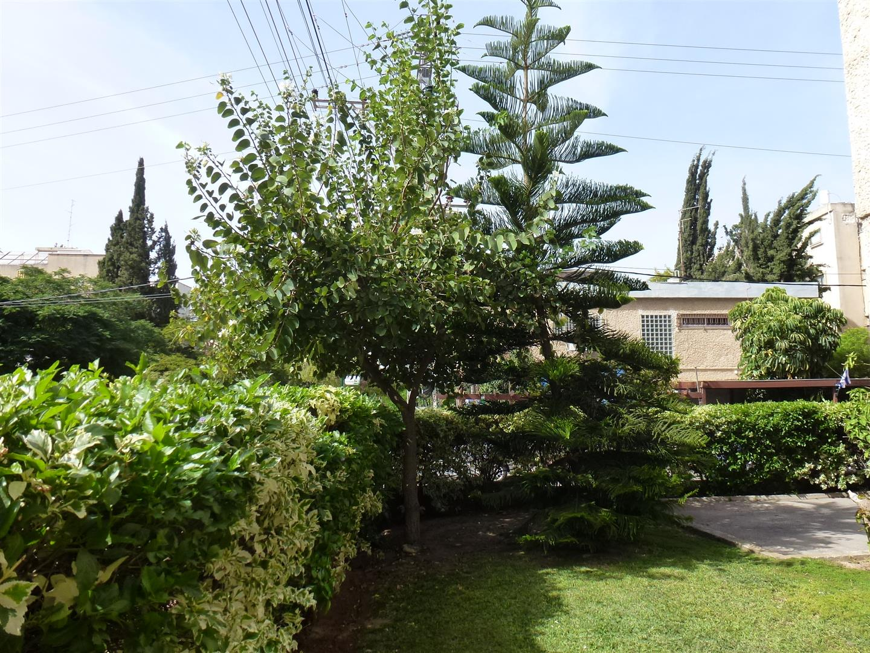 מאי 2016 העץ בפריחה לבנה מלבלבת ומרהיבה להנאת השכנים והעוברים בצידו