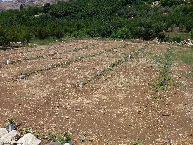 שימוש חוזר בקרטוני חלב גם בגידולי החקלאות של ארץ ישראל