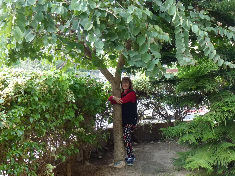 חיבוק אוהב לעץ הבוהיניה שלי המלווה אותי בצמיחתו בכל השנה