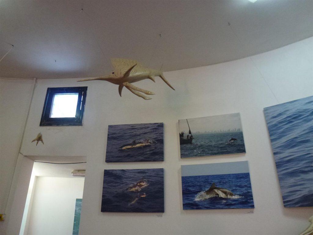 מרכז חקר ומידע ליונקים הימיים- מחמלי באשדוד