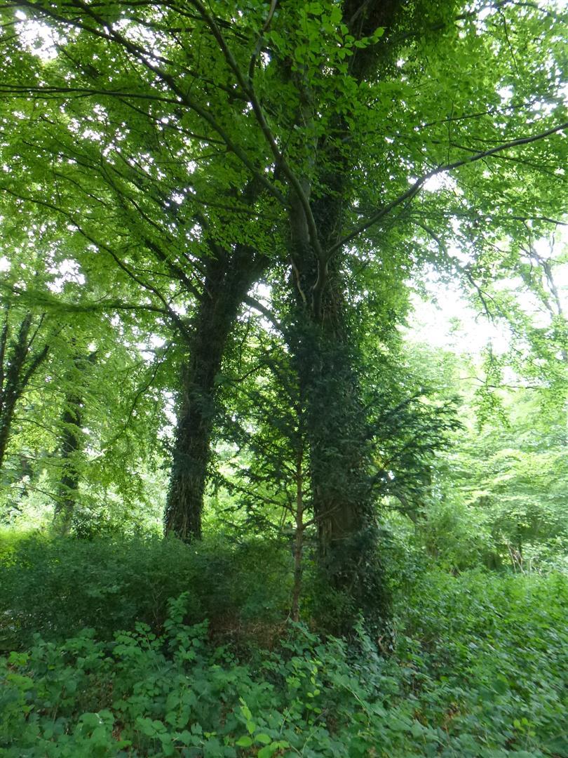ריאה ירוקה בלב קופנהגן עצים בירוק עד