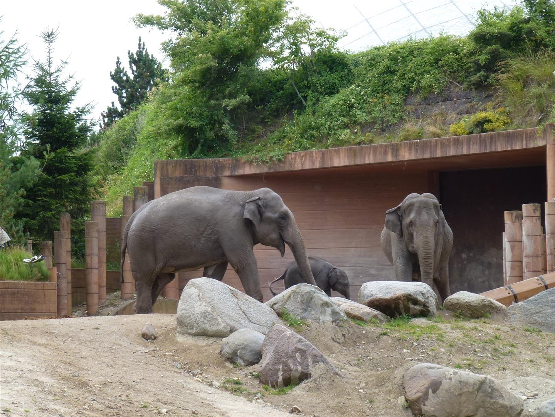 חצר גן החיות הגובלת בגני פרדריקסברג - מזל טוב לפיל הקטן שנולד לפני חודשיים