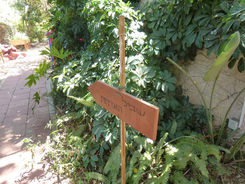 שבילים בגינה הקסומה של סודות ירוקים
