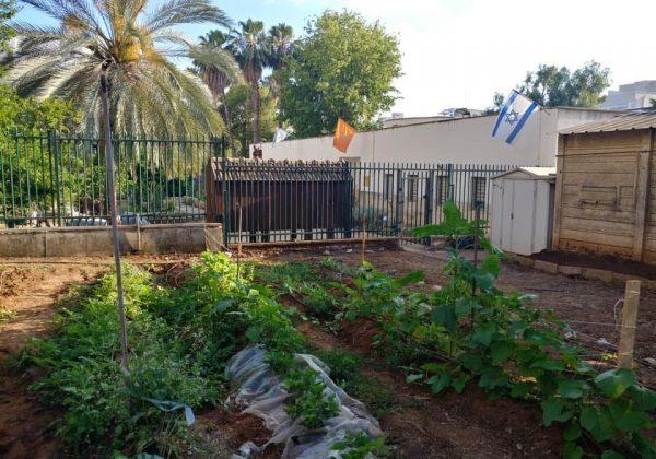"""מוזמנים להצטרף אלינו לגינה הקהילתית הבין דורית בביה""""ס """"ברטוב"""" ברעננה"""