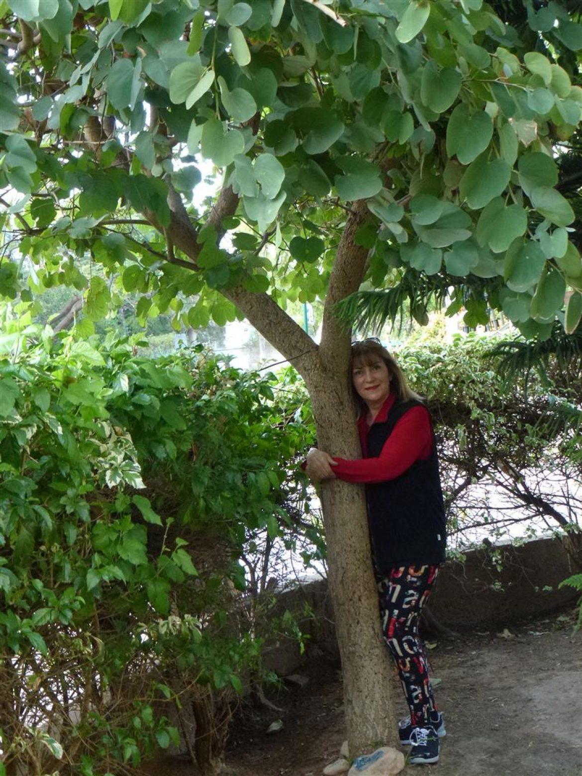 """""""לטעת עץ בעיר"""" מעקב אחר שתיל עץ הבוהיניה הגדל בחצרי מט""""ו בשבט משנת 2010"""