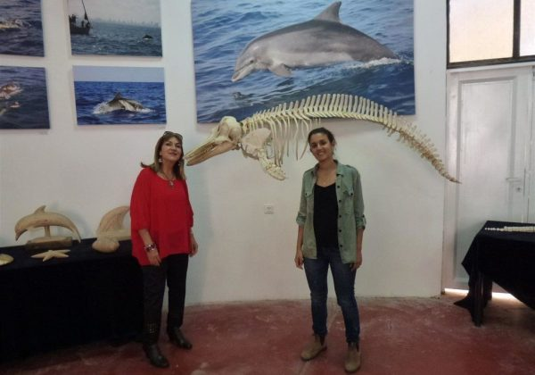 """סיור חווייתי במרכז חקר ומידע ב""""מרכז הדולפין והים"""" באשדוד"""